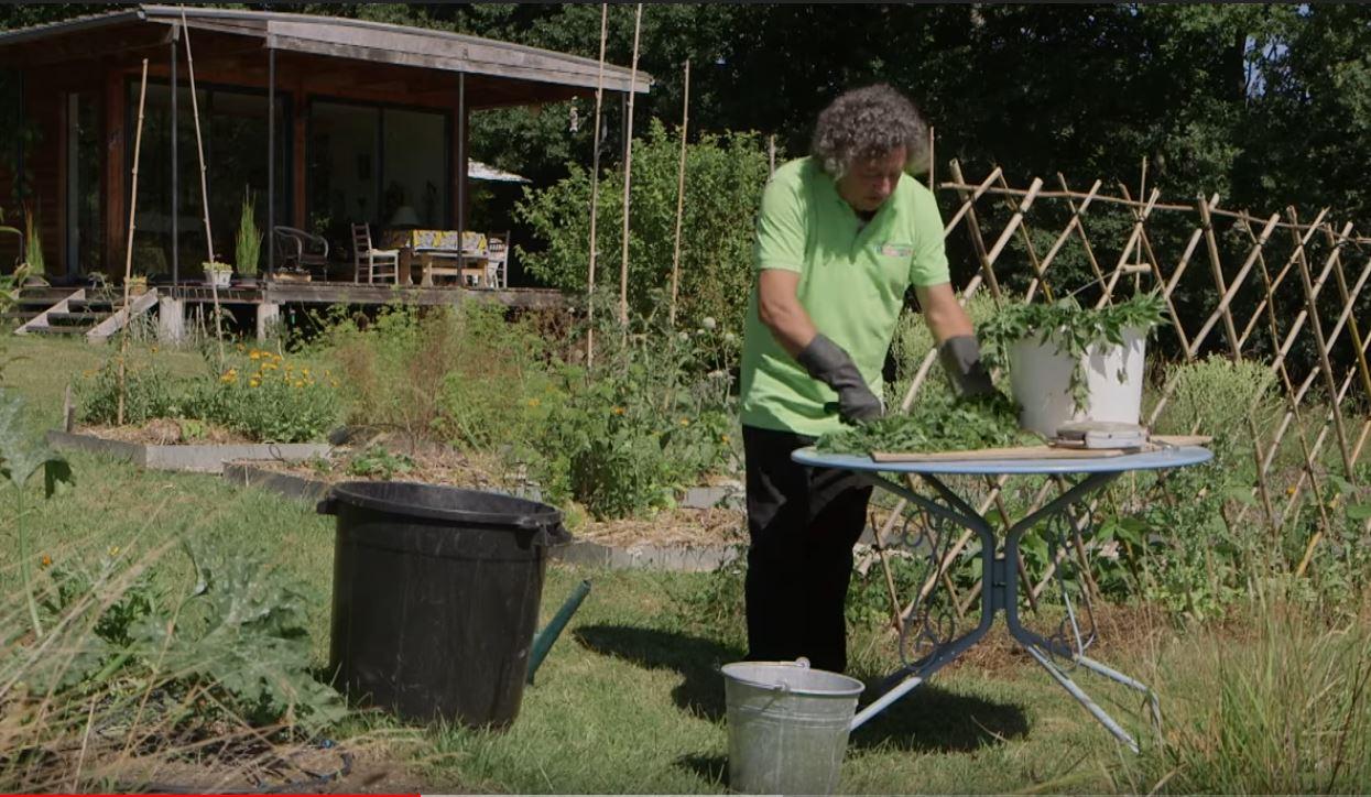 comment pr parer un purin d 39 ortie pour fortifier ses tomates. Black Bedroom Furniture Sets. Home Design Ideas